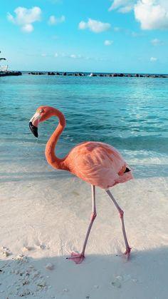 Aruba - Renassaince Prívate Island 😍 Tier Wallpaper, Flamingo Wallpaper, Ocean Wallpaper, Flamingo Art, Summer Wallpaper, Iphone Background Wallpaper, Animal Wallpaper, Nature Wallpaper, Pink Flamingos