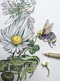 ∞ noel badges pugh ∞ : photo bee sketch, tatoo styles, bee photo, pen and w Watercolor Flowers, Watercolor Art, Bee Sketch, Tatoo Styles, Bee Photo, Art Prints For Home, Photoshop Design, Botanical Illustration, Line Drawing