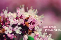 12x8 OR 10x8photo print. pink feelings . by EliseLynchPhotograph, $25.00