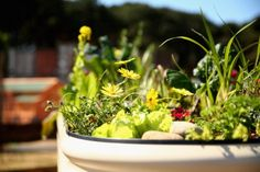 Ever heard of aquaponics? A really neat system to add to your home.