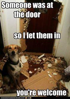 Dog Logic Has it's Flaws - Cheezburger