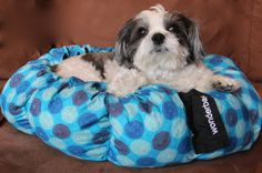 Pups Won't Stop Barking About the #Wonderbag.  Feature story in #AnimalFair