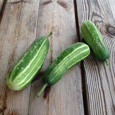 Summer gifts from the greenhouse #cucumbers #dacha #catskills #food (at White Lake, NY)