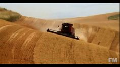 wheat harvest in Colombia 2016. !FM!.