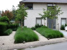 Ornamental grass underplanting