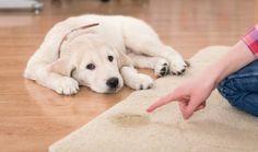 Votre enfant ou votre animal de compagnie a du mal à contrôler sa vessie ? Heureusement, il existe des astuces naturelles pour retirer ces taches jaunâtres et nauséabondes de vos linges et tapis.