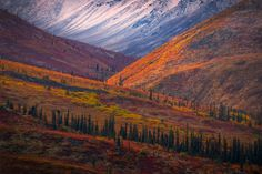 Images from along the Dempster Highway along the Yukon Highway in Canada