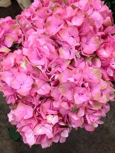 Hydrangea called 'Mango'...Sold in bunches of 10 stems from the Flowermonger the wholesale floral home delivery service.