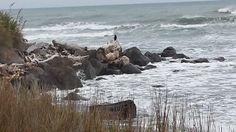 Bird at Tapuae Beach