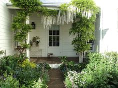 Love the wisteria
