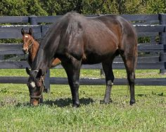 Do Equine Genetics Influence Behavior? - TheHorse.com | An equine behavior expert and veterinarian explains the the role that genetics play in a horse's behavior. #horses #TheHorse #horsebehavior