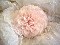 Madame Alfred Carriere rose by skblanks, via Flickr