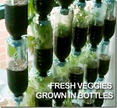 Vertical Vegetable Garden :: complete with 2 Howto videos by janice.eason.56