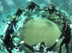 Kelleston Drain brain coral off Little Tobago