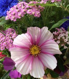 A journey growing cut flowers in a Scottish garden.