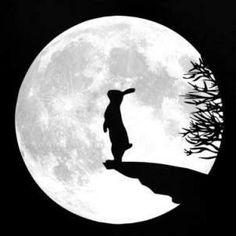 Conejo lunar