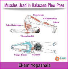 muscles used in crow pose ekamyogashala yoga asana