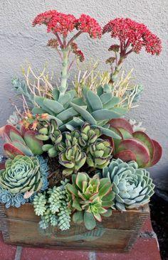 Mixed succulent bowl