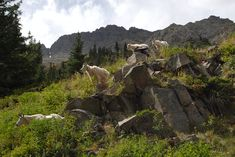 The Four Pass Loop is a 28 mile, 3 day hike that offers backpackers beautiful scenery and a variety of wildlife.