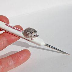 RESERVED for SORAYA - OOAK Miniature Hedgehog - Dollhouse Handmade Miniature 1:12 -  by Katie Doka