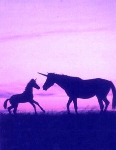 très belle image dommage que les licorne n'existe pas