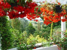 Частный сад в Southland, Новая Зеландия,
