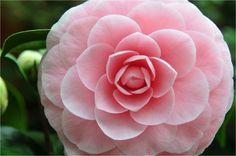 Bloemen & planten, pure emotie