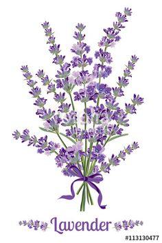 Vector: Beautiful bouquet of lavender flowers. Botanical illustration.