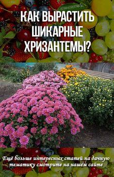 Small Farm, Garden Styles, Dahlia, Garden Plants, Home And Garden, Decor, Plants, Sodas, Floral
