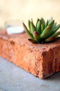 succulents never get old :)