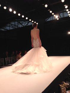 Eve of Milady Amalia Carrara http://www.bridalreflections.com/bridal-dress-designers/eve-milady http://www.bridalreflections.com/bridal-dress-designers/amalia-carrara