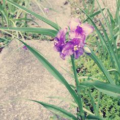Home Sweet Home: Flowers, Japanese Garden, 花, 庭, 和