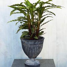 Äger du inga gröna fingrar, eller har du bara ont om ljus? Då kan dessa lättskötta växter vara något för ditt hem. Här är 10 växter som kan leva i den mörkaste av hörnor!