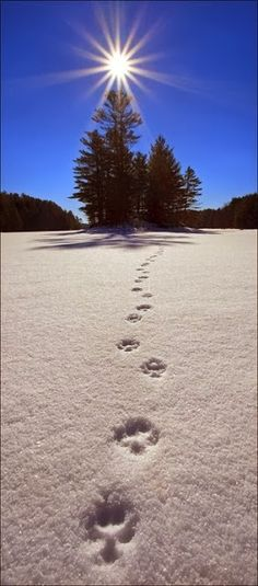 It's time to welcome new beginnings. Happy New Year! (photo pinned via @National Parks Conservation Association)