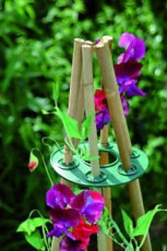 Bamboo Wigwam Grip Garden Plant Support Ring for Beans, Peas & Climbing Plants