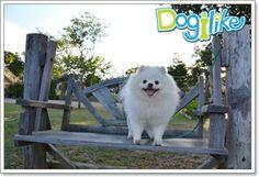 Dogilike.com