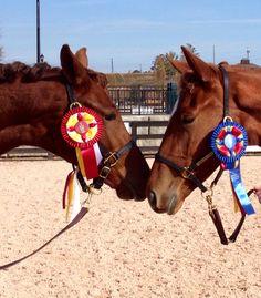 Dutch Warmblood, Warmblood Horses, Dressage Horses For Sale, Horse Breeds, Animals, Animales, Animaux, Animal, Animais