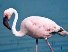 Overveier du å dra på safari i Sør-Afrika, da er den verdenskjente Kruger Nasjonalpark et absolutt must.   Det er altså god mulighet for å få uforglemmelige safariopplevelser i nasjonalparken. Kenya, Victoria Falls, Nelson Mandela, Mauritius, Impala, Cape Town, Flamingo, Safari, Animals