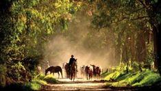 Horseback Riding in Ecuador - Visit Ancient Pyramids At Hacienda Zuleta Belize Hotels, Traveller's Tales, Riding Holiday, Beach Honeymoon Destinations, Equador, Galapagos Islands, Lake District, Horseback Riding, Trip Planning