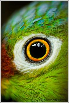 Výsledek obrázku pro all white cats Eye Photography, Animal Photography, Wildlife Photography, Beautiful Eyes, Beautiful Birds, Photo Oeil, Regard Animal, Eye Close Up, Eye Pictures