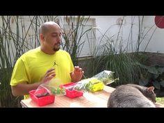 Semillas para futuros bonsai!!! - YouTube