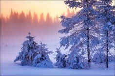 """Anatoly Sokolov, photography series """"Fairy Forest"""", is a collection of moments captured in the extreme cold along the Karelian Isthmus, a wide stretch of land in northwestern Russia. I Love Snow, Photography Series, Modern Metropolis, Beautiful Forest, Forest Fairy, Nature Animals, Winter Snow, Nature Photos, Winter Wonderland"""