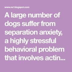 A large number of dogs suffer from separation anxiety, a highly stressful behavioral problem that involves acting out when their owners are away. Unfortunately, many people don't know how to effectively treat this disorder. This is largely due to the fact that they are looking at it from a human perspective rather than from the …
