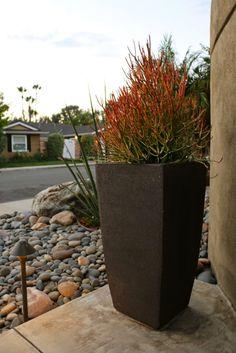 mid-century modern drought tolerant landscaping