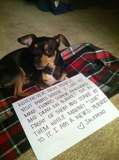 The best of dog shaming - Part 10 ~ These are hilarious