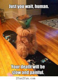Humour quotes, funny jokes, jokes funny, hilarious funny …For the best humour and hilarious jokes visit www.bestfunnyjokes4u.com/lol-funny-cat-pic/
