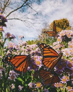 Best Animal Wallpaper Iphone Photography Nature Posts 18 Ideas - My best shares Butterfly Wallpaper Iphone, Iphone Background Wallpaper, Animal Wallpaper, Flower Wallpaper, Nature Wallpaper, Aesthetic Backgrounds, Aesthetic Iphone Wallpaper, Aesthetic Wallpapers, Nature Aesthetic