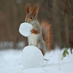 Russian Photographer Takes Pictures Of Squirrels Going NUTS In The Snow