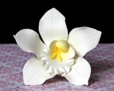 "4"" White Sugar Orchid handmade from gum paste.  Even more beautiful on a cake."