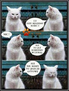 Stupid Memes, Funny Memes, Animals And Pets, Cute Animals, Some Jokes, Mehendi, Funny Cats, Cool Pictures, Haha